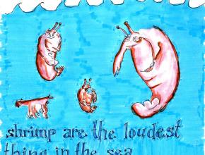 shrimp-are-loud